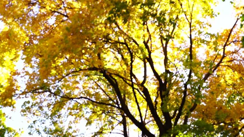 Una breve passeggiata per il parco d'autunno) Video di instagram.com/dinak_photographer?utm_source=ig_profile_shareigs