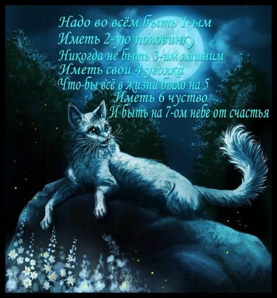 Коты воители огнезвезд фото - 282bd