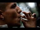 Почему не стоит курить травку или реальный вред марихуаны