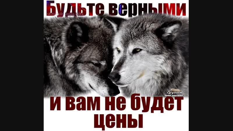 Doc146904969_484127475.mp4