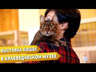 - Выставка кошек в краеведческом музее