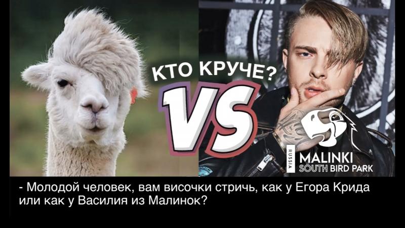 Как мы Васю с Ростова стригли