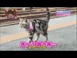 05B_09BY_[14.04.2012]Shimura Zoo Мана с котом в океанариуме [Cat1](720P)