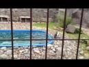 Купание пингвинов зоопарка Удмуртии