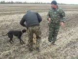 Охота с борзыми на Ставрополье