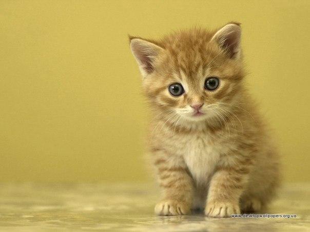 Мир кошек и котёнков