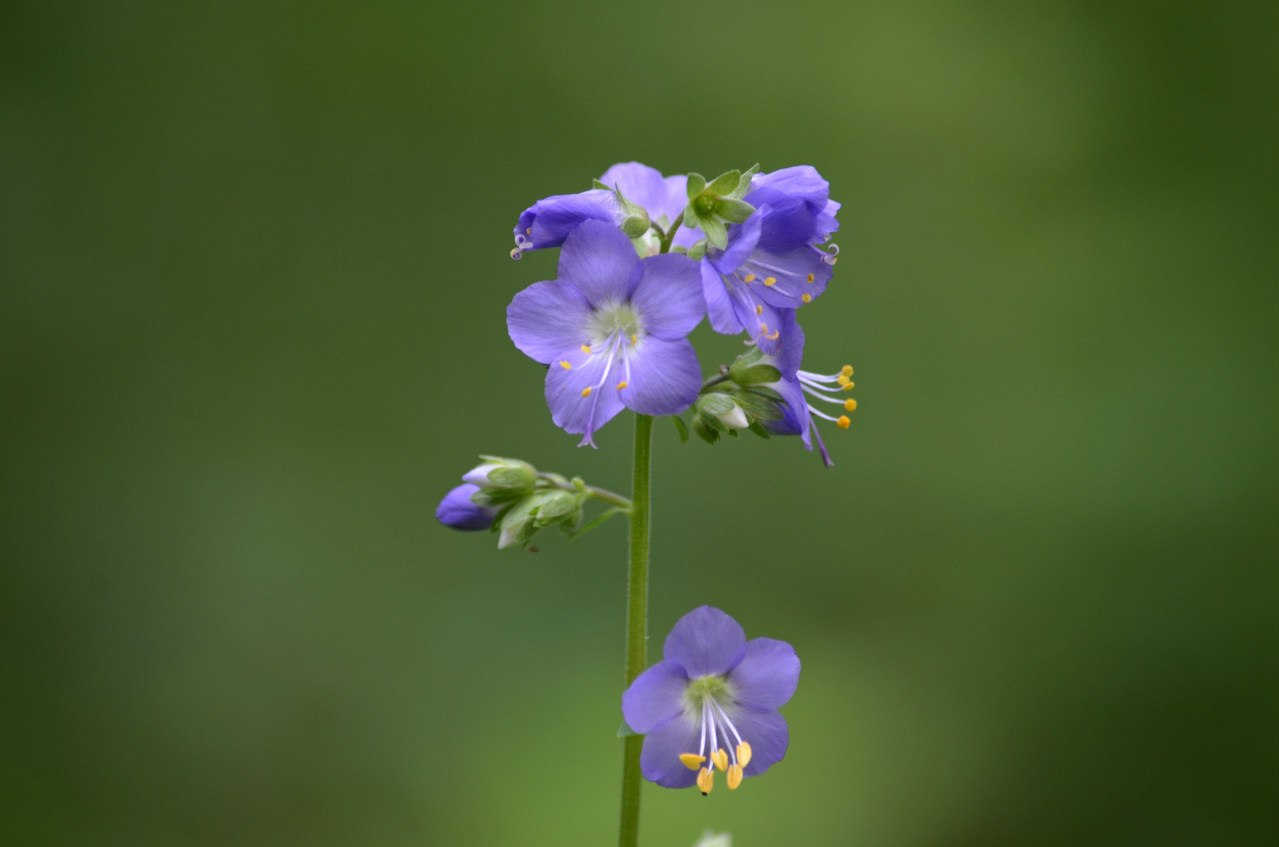 красивые цветочки (06.11.2014)