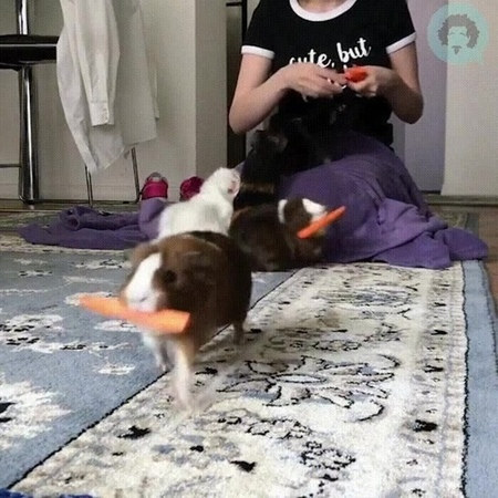 When there is nothing to eat, offer carrots to friends · coub, коуб