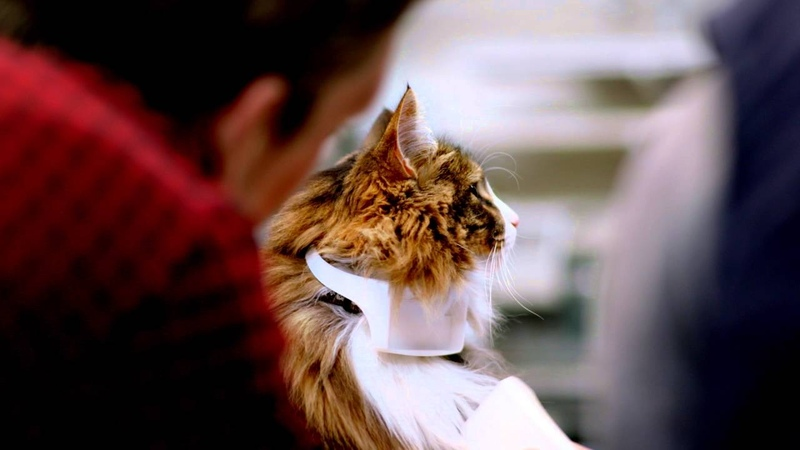 CATTERBOX™ The world's first talking cat collar 60