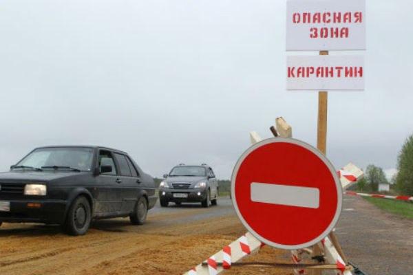 В Кашарском и Шолоховском районах Ростовской области введен карантин по бешенству