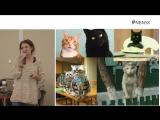 Как интернет изменил поведение людей — Софья Пантелеева