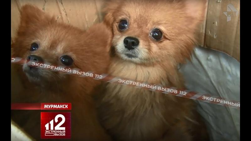 100 шпицев заморили голодом Концлагерь для собак