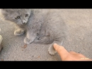 The kitten asks for help his paw under iron door