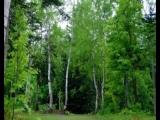 А Вы любите прогулки по лесу?