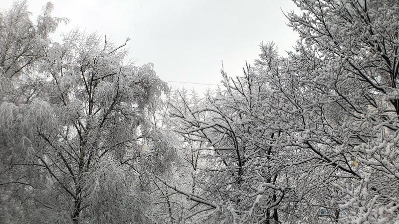 Снежное утро Москва Moment anamorphic lens iPhone X no gimbal