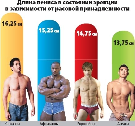 какой размер члена любят девушки Каменск-Шахтинский