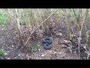 В Кунгуре активизировались змеи. Будьте осторожны! Смотрите под ноги!