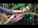 Волнистые попугайчики Ручного Zooпарка