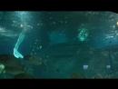 русалочки в океанариуме