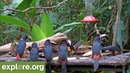 Cornell's Panama Fruit Feeder - Antidote to Stress