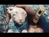 Тату на котике