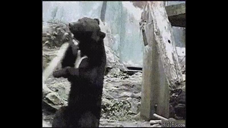 Может люди и произошли от обезьян, но русские произошли от медведей