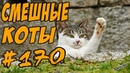 Приколы с котами и Кошками 2018 - Смешные Коты - Funny Cats 2018