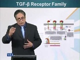 TGF-B Receptor Family - Cell Biology (Lecture 117)