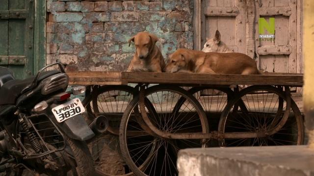 Пол О'Грэди: из любви к животным. Индия 2 серия / Paul O'Grady. For the Love of Animals. India (2017)
