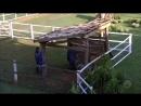 Peões se surpreendem com a chegada de uma lhama na fazenda