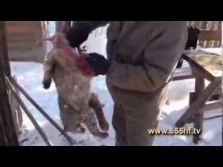 Жизнь в тайге на Дальнем Востоке  Часть 4  Зимой в тайге