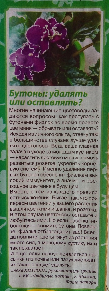 узамбарская фиалка или сенполия - Страница 2 Y_xAOpnMz24