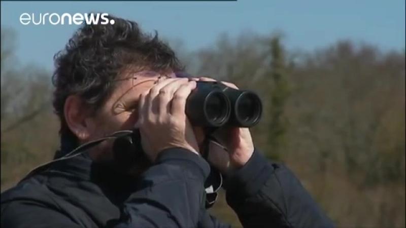 Масштабная экологическая катастрофа во Франции где стремительно сокращается популяция полевых птиц.