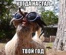 Виктор Чагин фото #15