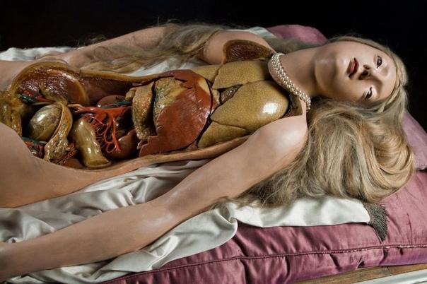 Наглядное пособие по анатомии конца 18 века, Анатомическая Венера.