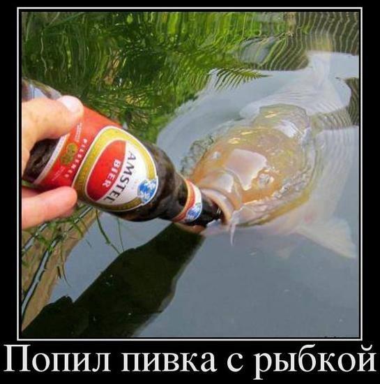 Пьют пускают в попу рыьок 1 фотография