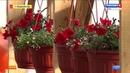 Семья из Кудымкара занялась выращиванием огурцов и томатов