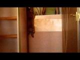 Щенок тервюрена -паркурист :)