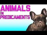 Animals In Predicaments: Funny Animal Fails (March 2018)   FailArmy