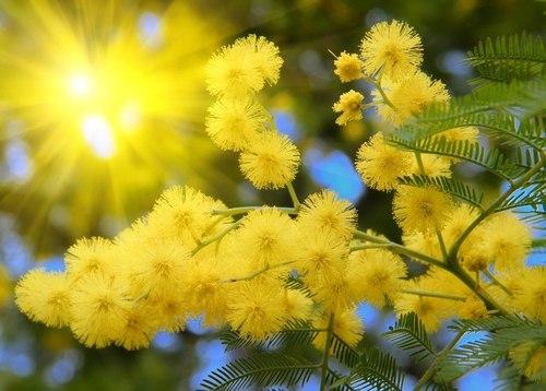 8 марта в Таганроге и Ростовской области будет солнечно и тепло