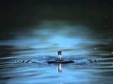 футаж капля в море