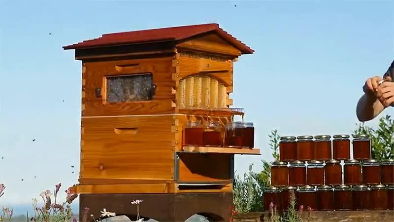 These guys are farming honey as I'm farming karma. An automatic honey dispenser
