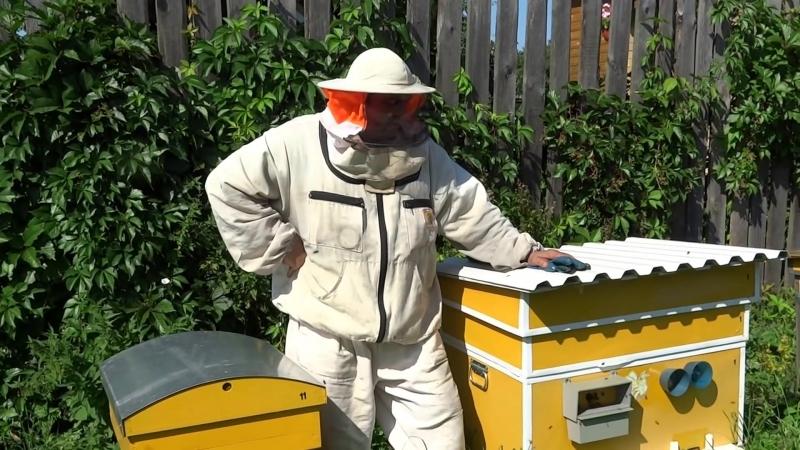 Решение: Как исправить злой, но современный улей в пчеловодстве 2018!