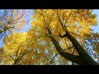 4K Fall Footage from Washington State - Autumns Beauty Relax Video. Part #2