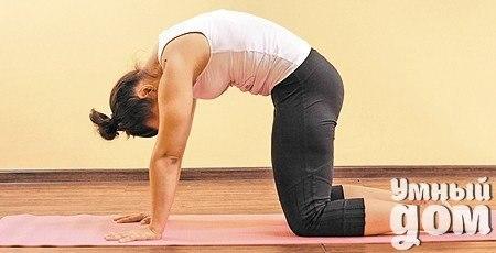Йога для начинающих: 6 упражнений для укрепления спины Позвоночник поддерживают маленькие моносегментарные мышцы, идущие от позвонка к позвонку. А поверх них – большие мультисегментарные мышцы. Наращивать только большие мышцы на тренажерах бессмысленно. Гибкость и питание позвоночнику дают только маленькие. Поддерживать их в тонусе можно с помощью йоги, пилатеса и плавания. Йогатерапия является наиболее эффективным способом. Помимо упражнений для укрепления мышц йогатерапия включает в себя…