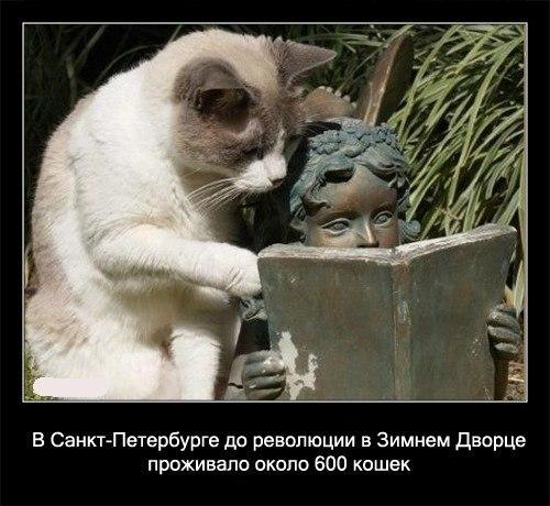 Всё о кошках и собаках - Страница 2 HkpcyI6CbCI