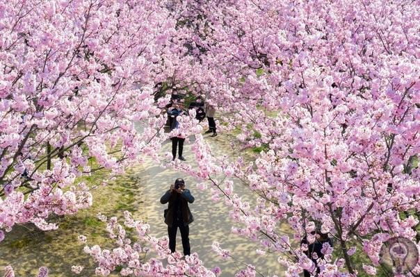 Весна на планете. Ч.-2