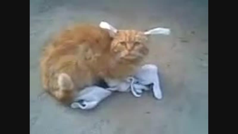 Shere.Khan - Рыжий кот в перчатках