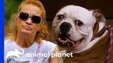 Bulldog Reunited With Family After Being Abandoned At Villalobos Pit Bulls &amp Parolees