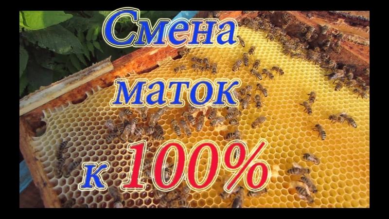 Один из лучших методов подсадки и смены плодных маток в пчелосемьях, подробно от А до Я.